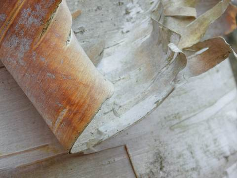 New-Hampshire-Workshop-20101012-0156.jpg