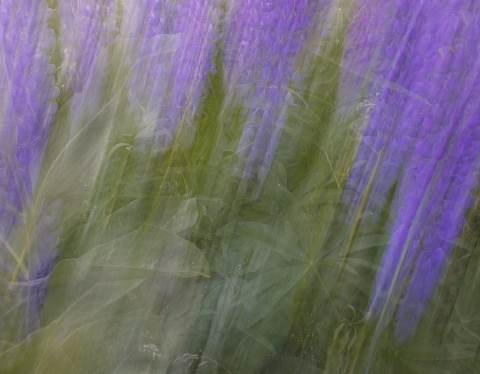 Adirondack-Workshop-20110620-0136.jpg